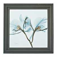 Orchid In Blue X-Ray Framed Art Print
