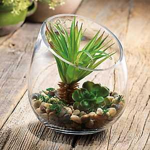 Succulent Arrangement in Slant Bowl Terrarium