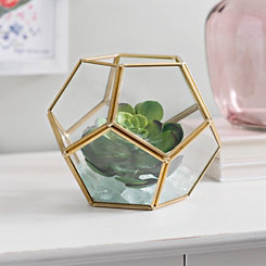 Gold Dome Geometric Terrarium