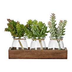 Succulent Crate Arrangement
