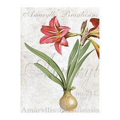 Amaryllis Brasiliensis Canvas Art Print