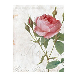 Rosa Bifera Canvas Art Print