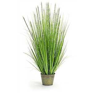 Zebra Grass Arrangement in Green Pot Planter