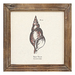 Tulip Shell Framed Linen Plaque
