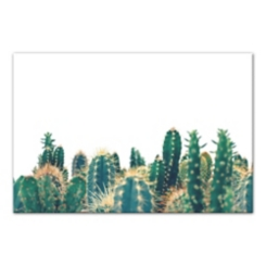 Prickly Cactus Canvas Art Print