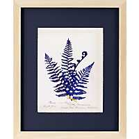 Fern On Indigo Framed Art Print