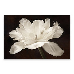 White Tulip Canvas Art Print
