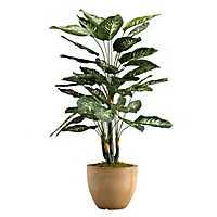 Diffenbachia Plant In Round Resin Planter, 36 in.