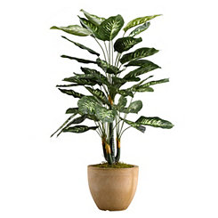 Diffenbachia Plant In Round Resin Planter, 36 in.