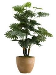 Selloum Philo Plant In Round Planter, 36 in.
