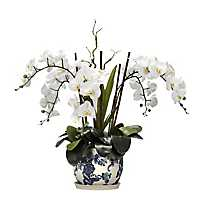 White Orchid Arrangement in Blue Ceramic Planter