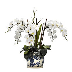 White Orchid Arrangement in Blue Ceramic Planter