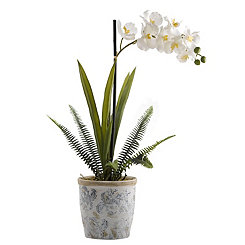 Cream Vanda Orchid In Blue And White Ceramic Vase