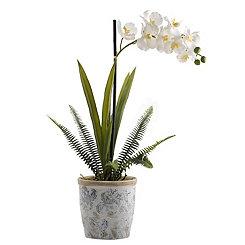 Cream Vanda Orchid In Blue And White Ceramic Vase