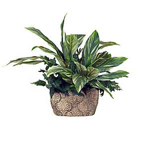 Dracaena and Ivy Plant in Cement Planter, 27 in.