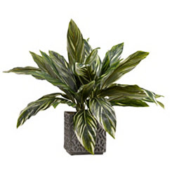 Dracaena Plant In Concrete Planter, 27 in.