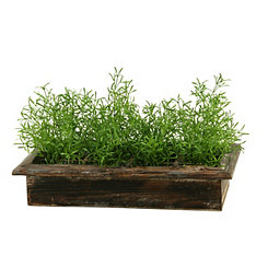 Wild Asparagus Arrangement in Wood Box Planter