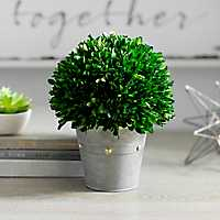 Boxwood Arrangement in Studded Planter, 9.4 in.