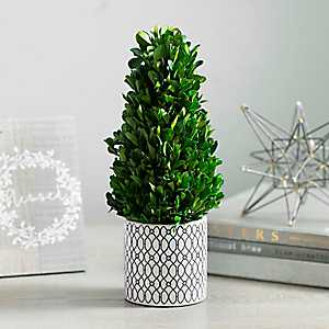 Boxwood Cone Topiary in Trellis Planter, 13 in.