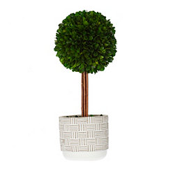 Boxwood Topiary in Gray Stripe Planter, 14 in.