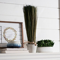 Tall Grass in Terra Cotta Planter, 23 in.