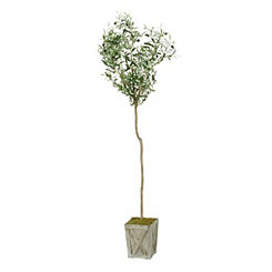 Olive Tree in Wooden Planter, 5 ft.