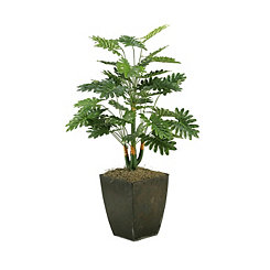 Selloum Philo Plant in Metal Planter, 42 in.