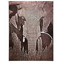 Tusker Metal Art Print
