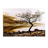 Lakeside Tree Canvas Art Print