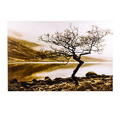 Lakeside Tree Canvas Art Print