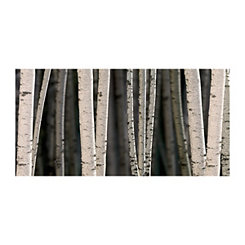 Birches Canvas Art Print
