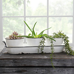 White with Black Rims Planters and Tray, Set of 4