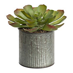 Succulent in Ribbed Metal Planter