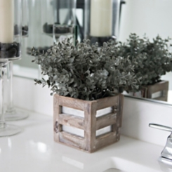 Frosted Boxwood in Paneled Wood Cube