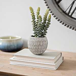 Succulent Arrangement in Round Concrete Pot