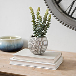 Succulent Arrangement in Round Concrete Pot