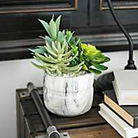Succulent Arrangement in White Marble Pot