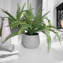 Boston Fern Arrangement in Concrete Planter