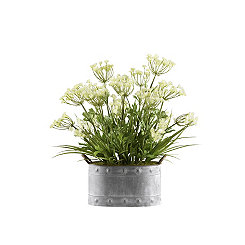 Queen Anne's Lace in Metal Planter