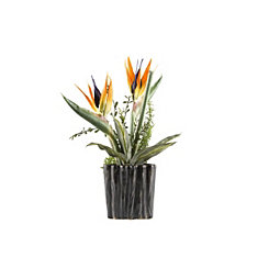 Birds of Paradise Arrangement, 18.5 in.