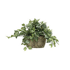 Pothos Ivy Arrangement in Ceramic Planter