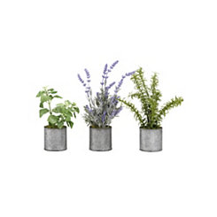 Assorted Herbs in Tin Planters, Set of 3