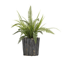 Boston Fern in Ridged Ceramic Planter, 17.5 in.