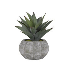 Aloe Plant in Round Gray Planter