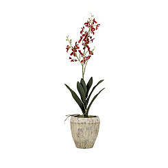 Red Orchid Arrangement in Aged Ceramic Planter