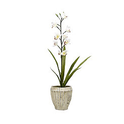 White Orchid Arrangement in Aged Cement Planter