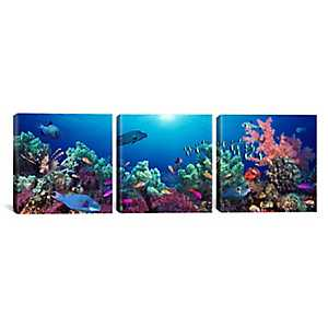 Under the Sea Triptych Canvas Art Prints, Set of 3