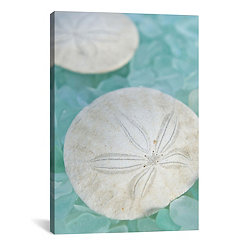 Sand Dollar and Seaglass Canvas Art Print