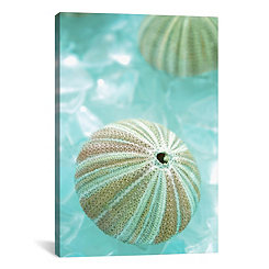 Sea Urchin and Seaglass Canvas Art Print