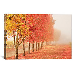 Fall Trees in the Mist Canvas Art Print
